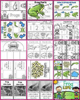 Frog Life (Cycle)