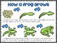 My Frog Life (Cycle)