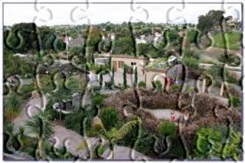 My Garden 169