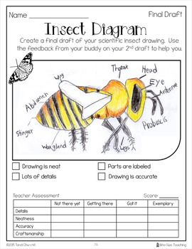 Insect Research & Informative Writing Packet