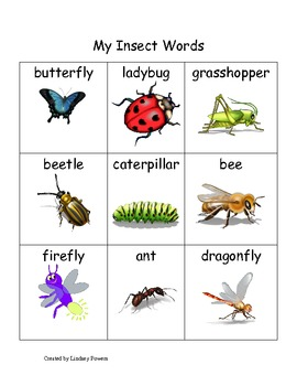 My Insect Words