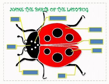 My Ladybug Project  - Learn - Math