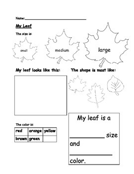 Kindergarten My Leaf worksheet