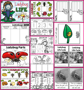 Life Cycle Bundle -- Butterfly, Ladybug, Chicken, and Frog