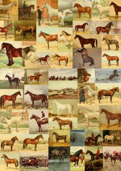 My Lovely Horse - 50 colour images of horses to use for anything!