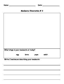 My Mealworm Journal
