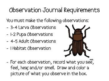 my mealworm observation journal by smart chick tpt. Black Bedroom Furniture Sets. Home Design Ideas