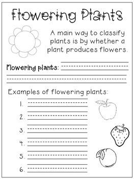My Plant Book
