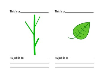 My Plant Book: Parts and Functions