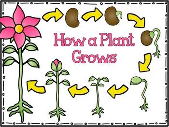 My Plant's Life