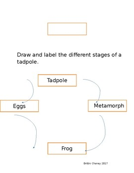 My Tadpole Research Project