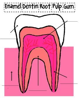 My Teeth / Dear Tooth Fairy