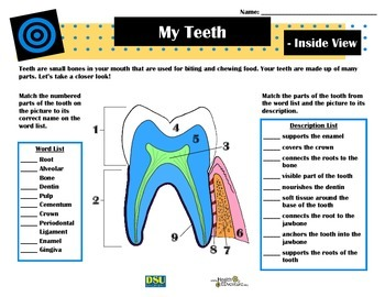 My Teeth - Inside View