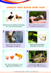 Mysteries - Animals that Hatch from Eggs (I) - Grade 1 ('Triple-Track Lines')