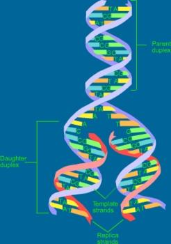 Mysteries of Genetics
