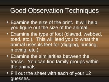 Mystery Animal Tracks PowerPoint