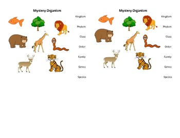 Mystery Taxonomy: Animal Classification