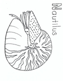 N for Nautilus coloring page