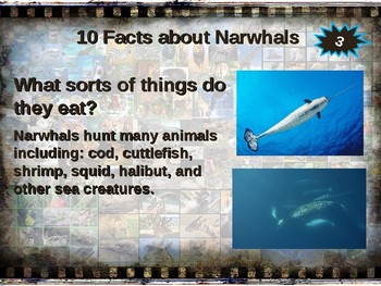 NARWHALS: 10 facts. Fun, engaging PPT (w links & free graphic organizer)