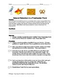 NATURAL SELECTION:  Goldfish Simulation Lab