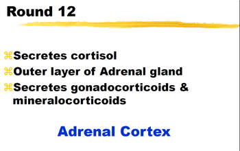 ENDOCRINE SYSTEM ~PowerPoint ADD A CLUE Review Game~