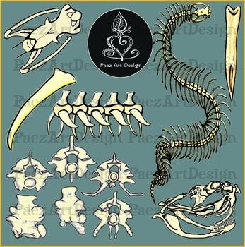 Snake Bones Clipart