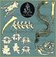Snake Bones Clipart {Paez Art Design}