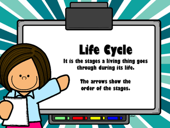 NEW  Science Movie Clips Project (Life Cycles, Water Cycles, Food Chain)