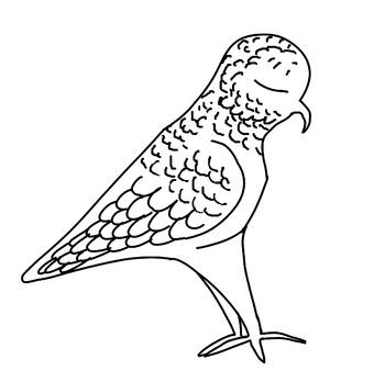 NEW ZEALAND NATIVE BIRD CLIP ART