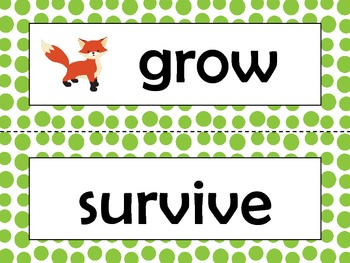 NGSS 1st Grade Science Vocabulary Cards: Structure & Function: Plants & Animals