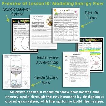 NGSS 5th Grade Energy in Ecosystems BUNDLE