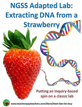 Dna Extraction And Strawberry Worksheets Teaching Resources Tpt