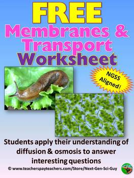 NGSS Aligned: FREE Cell Membrane and Transport Worksheet