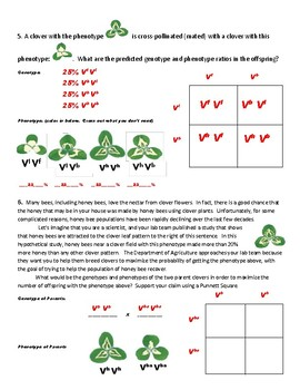NGSS Aligned: Shamrock Genetics: Practice with a Multiple Alleles Trait