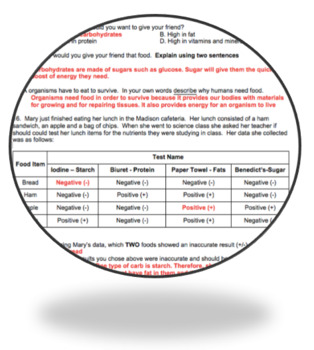 NGSS Alined Food Nutrients & Energy in The Human Body: Assessment