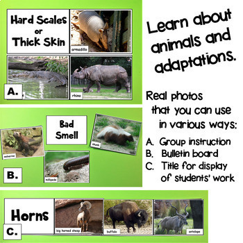 NGSS Animal Photos: Structure, Function, Inheritance of Traits Help them Survive