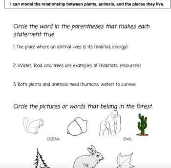 NGSS Kindergarten Assessment Bundle