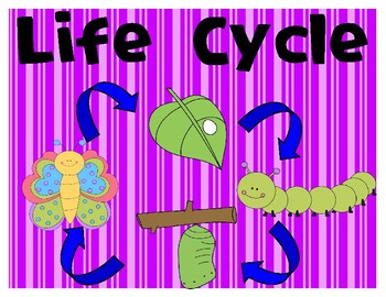 NGSS Life Cycle vocabulary cards