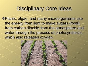 NGSS MS LS1-6 Molecules to Organisms: Structures and Processes-Photosynthesis