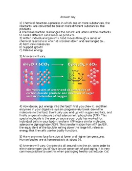 NGSS MS LS1-7 From Molecules to Organisms:Food Molecules Worksheet with Key