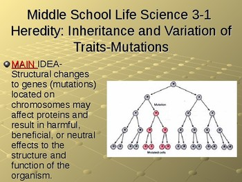NGSS MS-LS3-1 Heredity: Mutations