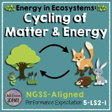 NGSS Model Matter and Energy in Ecosystems (5-LS2-1 and MS-LS2-3)
