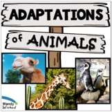 3 Animal Structures and Functions   Adaptations and Extern