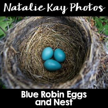 NK Photos - Blue Robin Egg and Nest