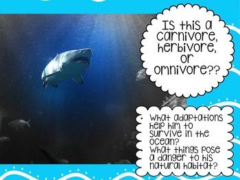 NO-PREP Animal Adaptations & Ecosystems Lesson-3rd, 4th, 5th Grade!