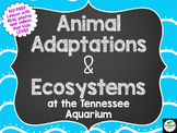 NO-PREP Animal Adaptations & Ecosystems Lesson-3rd, 4th, 5