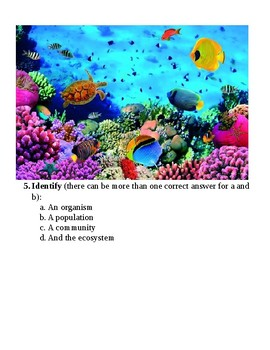 NO PREP Need a Lesson Quick! Series: Ecological Organization