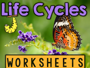 Life Cycles of Frog, Butterfly, Plant, & Ladybug Worksheets & Printables