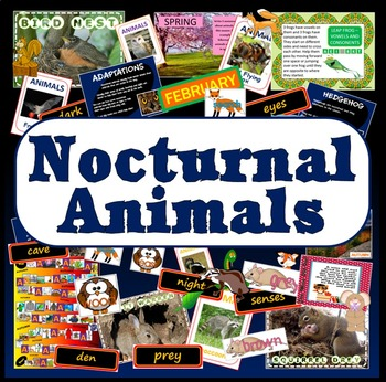 NOCTURNAL ANIMALS TEACHING RESOURCES DISPLAY SCIENCE HIBERNATION KS 1-2