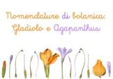 NOMENCLATURE BOTANICA GLADIOLO E AGAPANTHUS (Flowers)